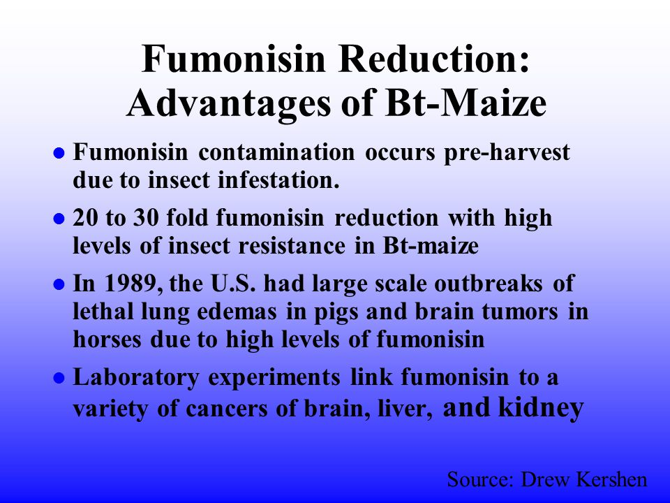 Fumonisin Reduction: Advantages of Bt-Maize l Fumonisin contamination occurs pre-harvest due to insect infestation.