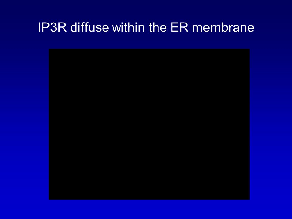 IP3R diffuse within the ER membrane