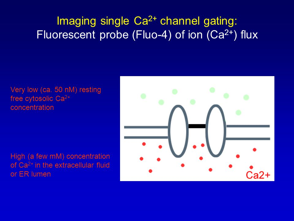 Advantages of optical single-channel Ca 2+ imaging Massively parallel - simultaneous and independent recording from many hundreds ion channels with time resolution approaching that of patch-clamp recording Applicable to both voltage- and ligand- gated ion channels with partial Ca 2+ permeability Allows spatial mapping of the functional ion channels and measurement of their motility So, should you throw away your patch-clamp ??.