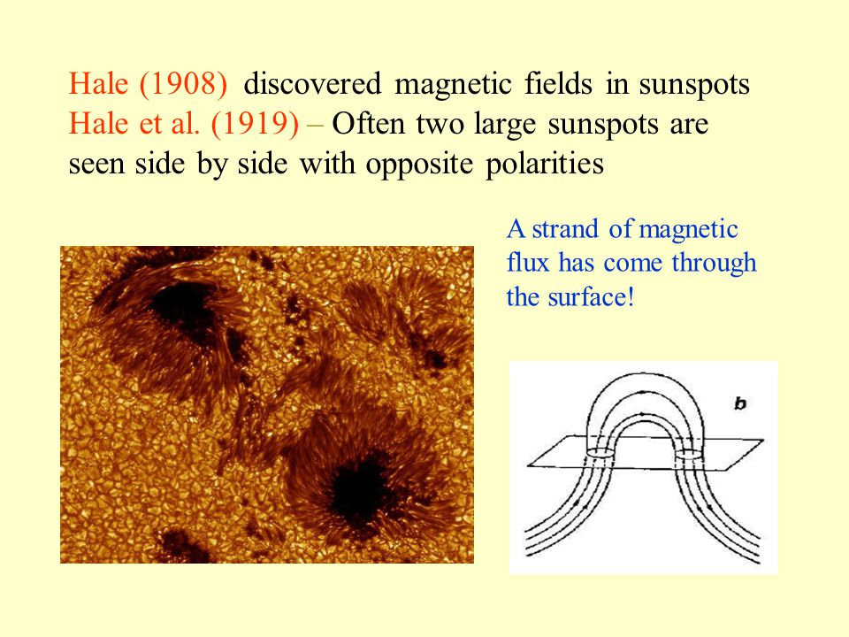 Hale (1908) discovered magnetic fields in sunspots Hale et al.