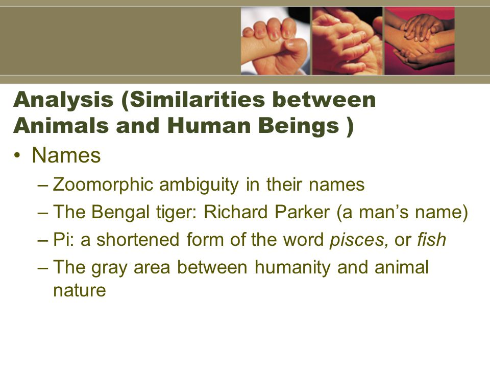 Analysis (Similarities between Animals and Human Beings ) Names –Zoomorphic ambiguity in their names –The Bengal tiger: Richard Parker (a man's name) –Pi: a shortened form of the word pisces, or fish –The gray area between humanity and animal nature