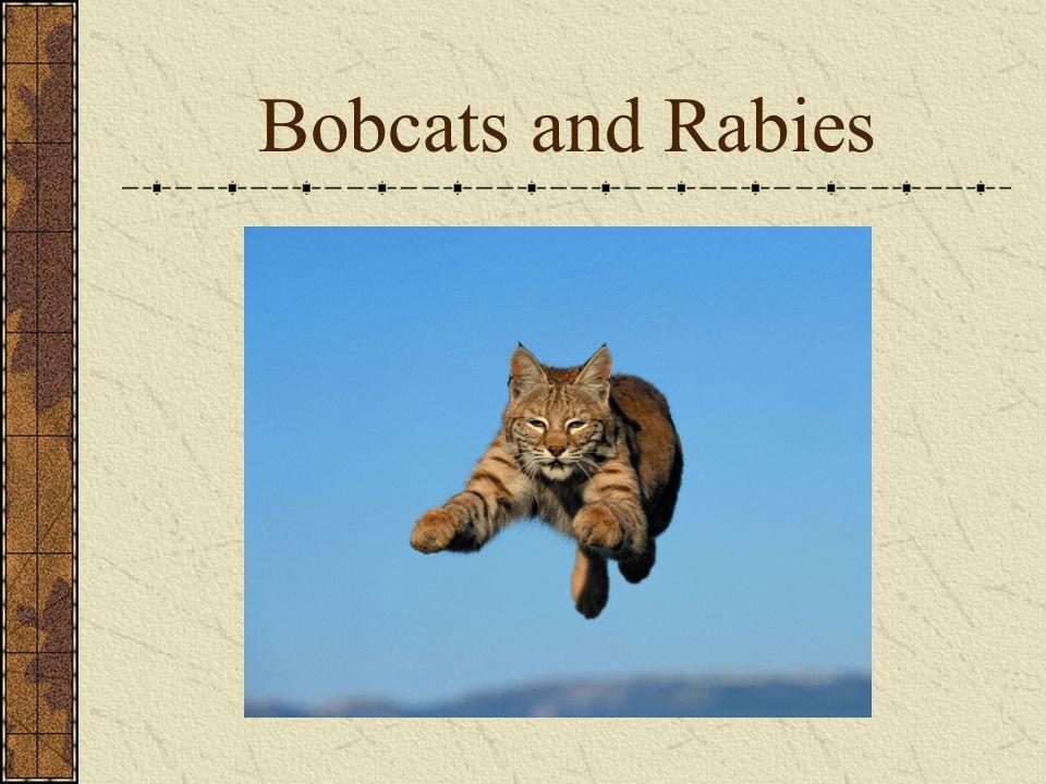 Bobcats and Rabies