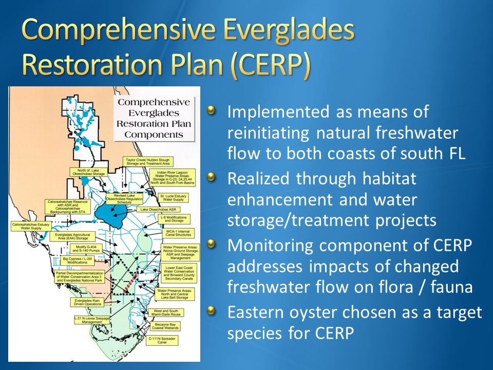 Implemented as means of reinitiating natural freshwater flow to both coasts of south FL Realized through habitat enhancement and water storage/treatment projects Monitoring component of CERP addresses impacts of changed freshwater flow on flora / fauna Eastern oyster chosen as a target species for CERP