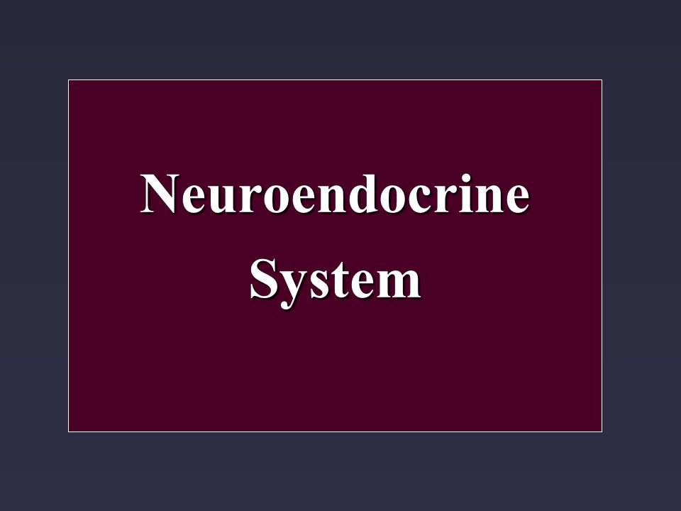 NeuroendocrineSystem