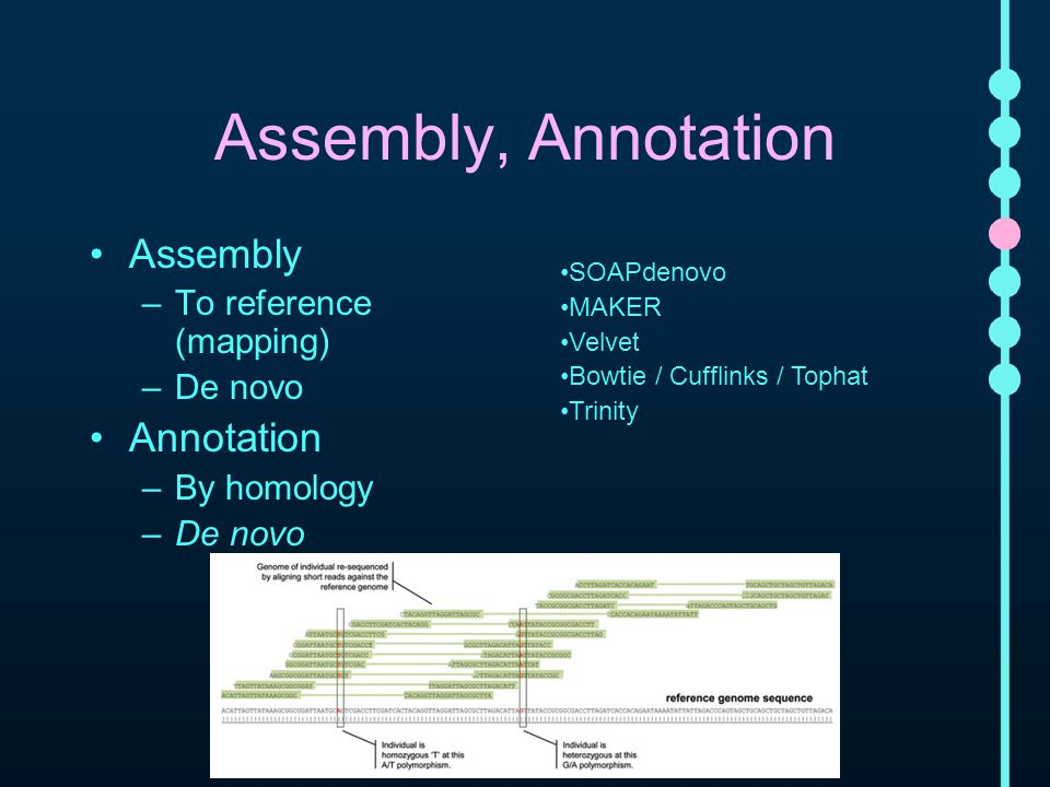 Assembly, Annotation Assembly –To reference (mapping) –De novo Annotation –By homology –De novo SOAPdenovo MAKER Velvet Bowtie / Cufflinks / Tophat Trinity