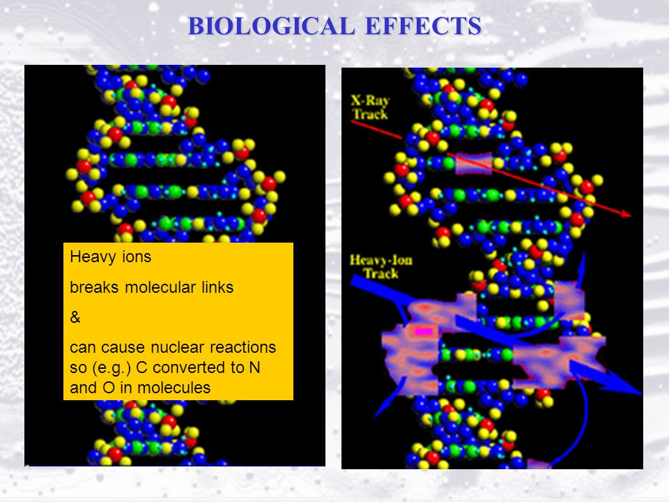 BIOLOGICAL EFFECTS Heavy ions breaks molecular links & can cause nuclear reactions so (e.g.) C converted to N and O in molecules