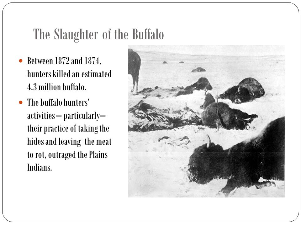 The Slaughter of the Buffalo Between 1872 and 1874, hunters killed an estimated 4.3 million buffalo.