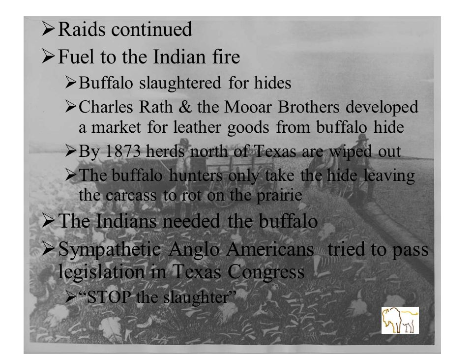  Raids continued  Fuel to the Indian fire  Buffalo slaughtered for hides  Charles Rath & the Mooar Brothers developed a market for leather goods from buffalo hide  By 1873 herds north of Texas are wiped out  The buffalo hunters only take the hide leaving the carcass to rot on the prairie  The Indians needed the buffalo  Sympathetic Anglo Americans tried to pass legislation in Texas Congress  STOP the slaughter