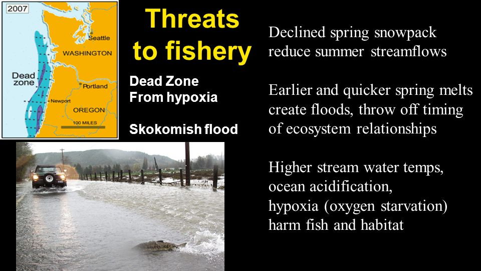 Threats to fishery Declined spring snowpack reduce summer streamflows Earlier and quicker spring melts create floods, throw off timing of ecosystem relationships Higher stream water temps, ocean acidification, hypoxia (oxygen starvation) harm fish and habitat Dead Zone From hypoxia Skokomish flood