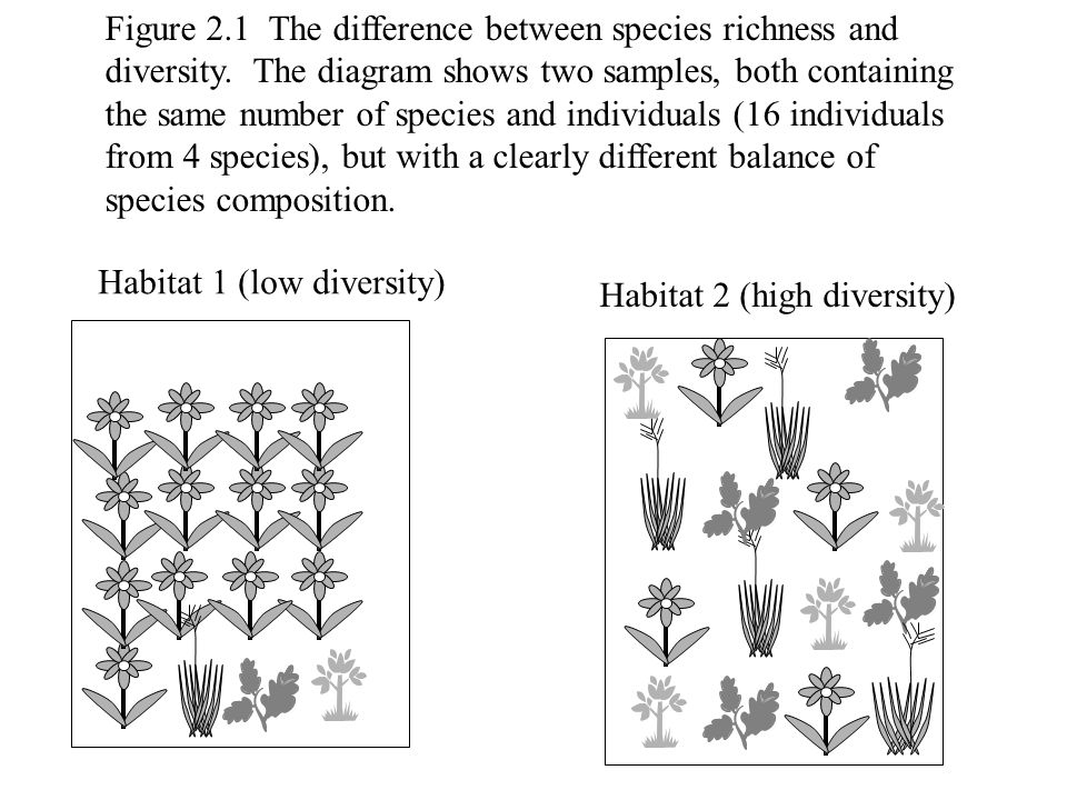 Figure 2.1 The difference between species richness and diversity. The diagram shows two samples, both containing the same number of species and indivi