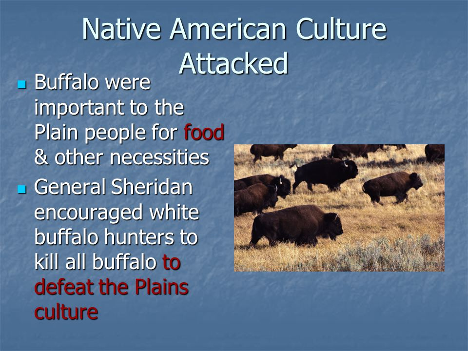 Native American Culture Attacked Buffalo were important to the Plain people for food & other necessities Buffalo were important to the Plain people fo