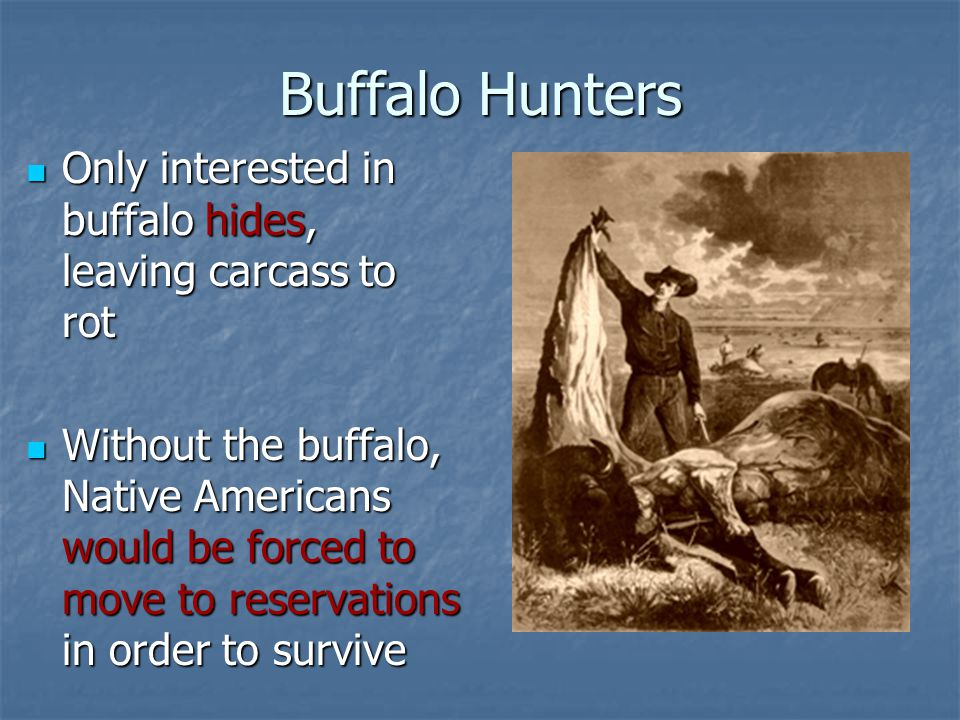 Buffalo Hunters Only interested in buffalo hides, leaving carcass to rot Only interested in buffalo hides, leaving carcass to rot Without the buffalo,