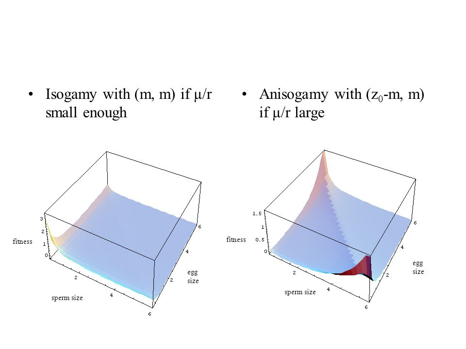 Isogamy with (m, m) if µ/r small enough Anisogamy with (z 0 -m, m) if µ/r large sperm size egg size fitness egg size sperm size fitness