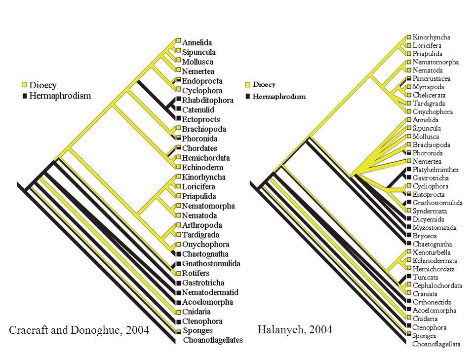 Cracraft and Donoghue, 2004 Halanych, 2004
