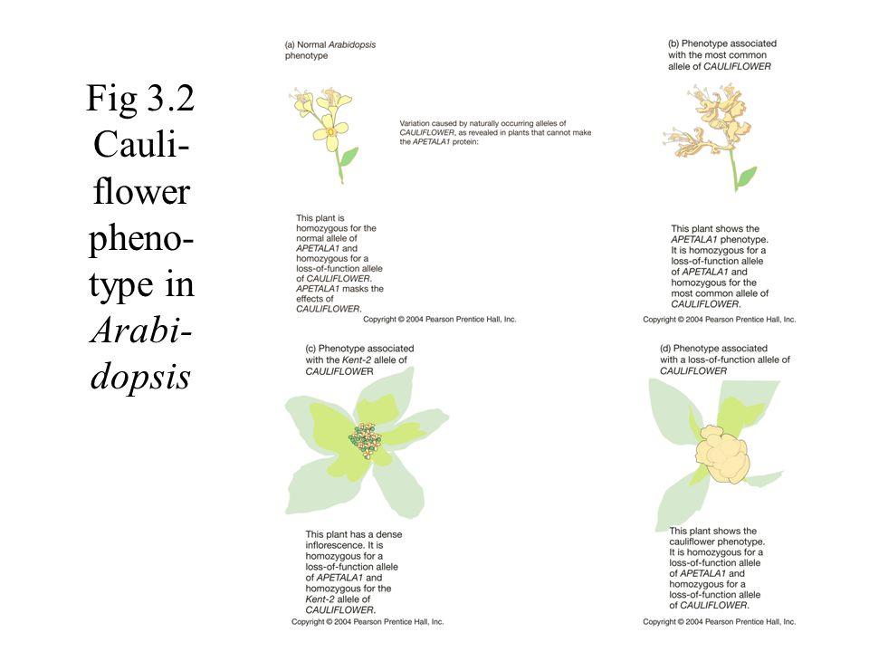 The Evolution of Flower Color in an Experimental Snapdragon Population – 1 Jones, K.N.