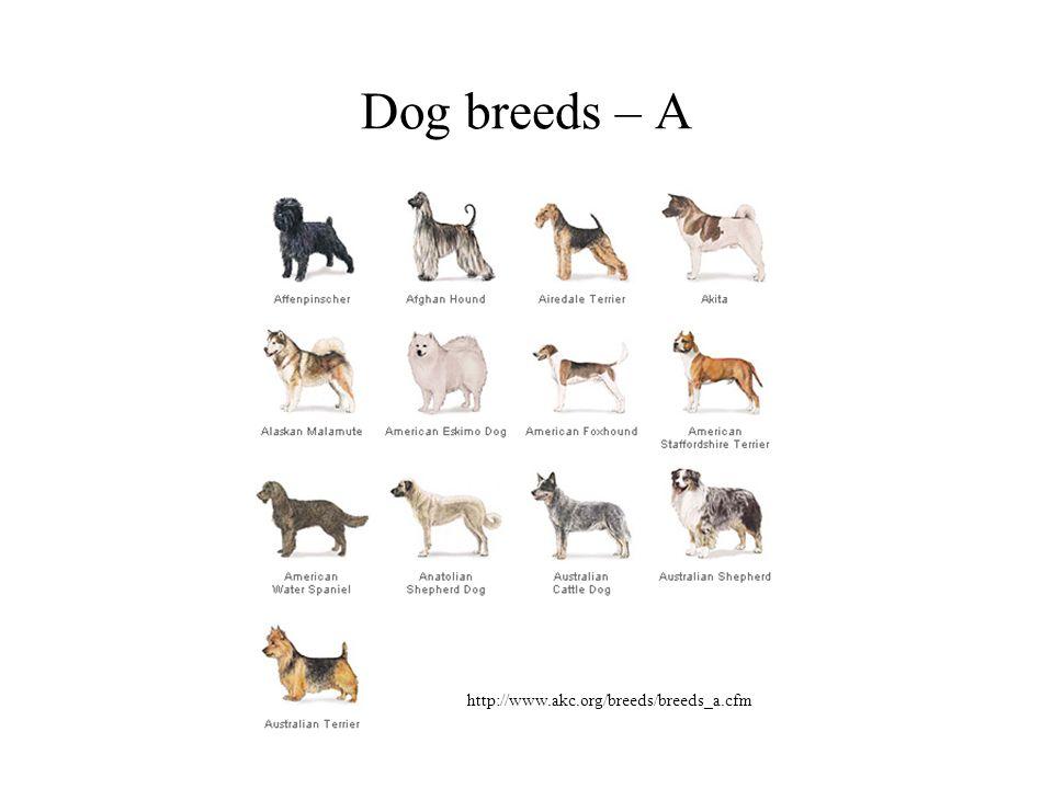 Dog breeds – A http://www.akc.org/breeds/breeds_a.cfm