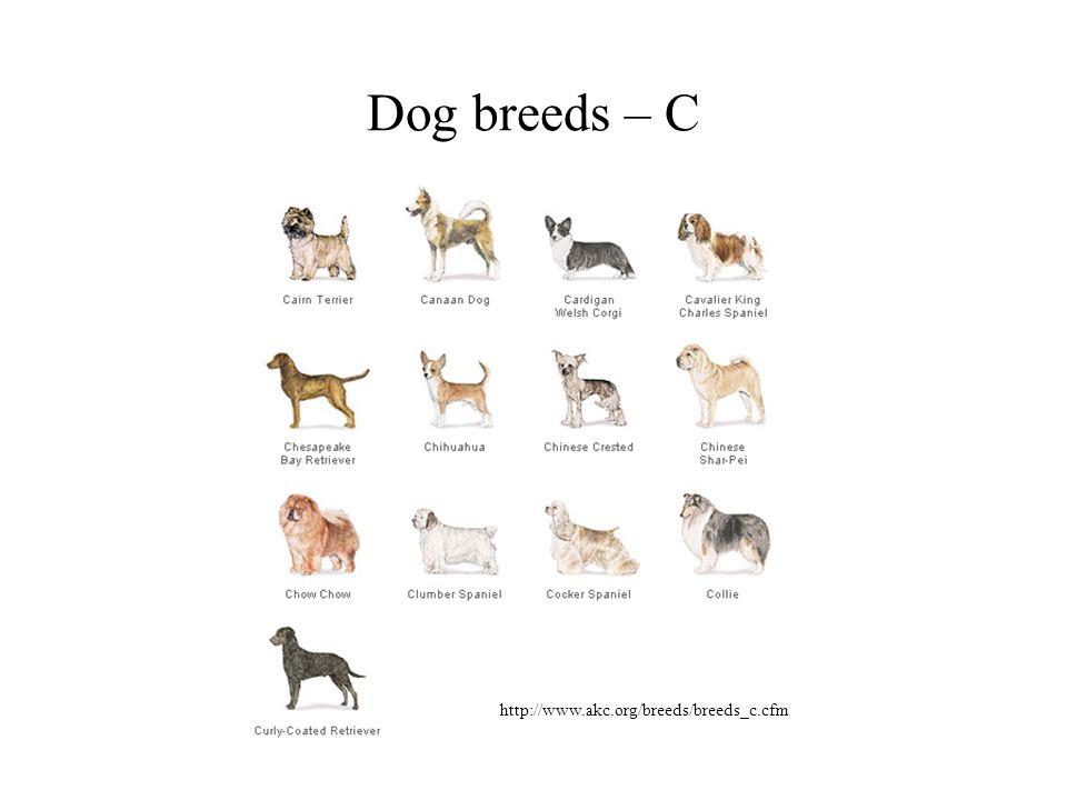 Dog breeds – C http://www.akc.org/breeds/breeds_c.cfm