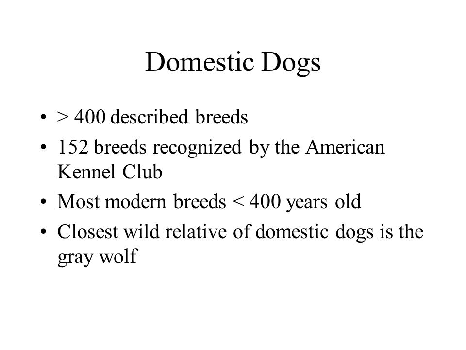 Domestic Dogs > 400 described breeds 152 breeds recognized by the American Kennel Club Most modern breeds < 400 years old Closest wild relative of dom