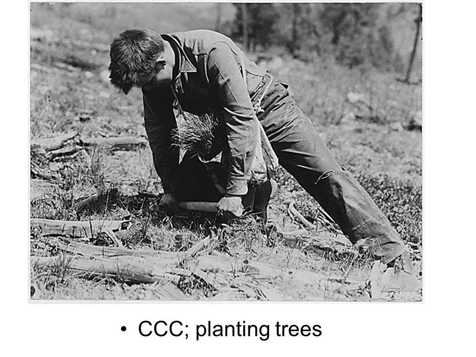 CCC; planting trees