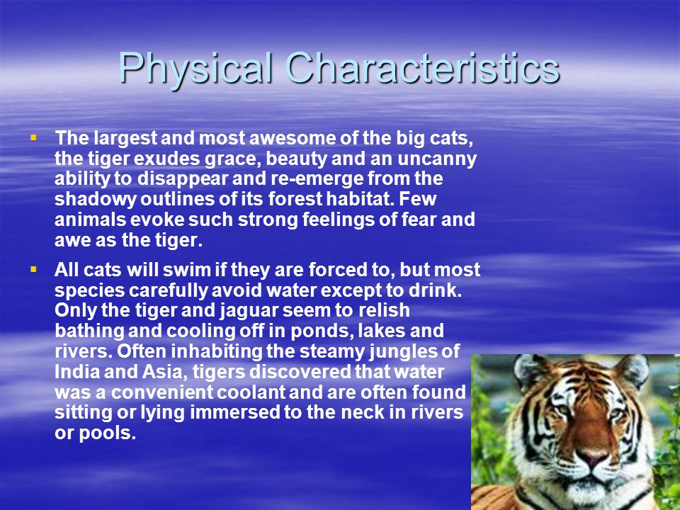 Physical Characteristics   The largest and most awesome of the big cats, the tiger exudes grace, beauty and an uncanny ability to disappear and re-e