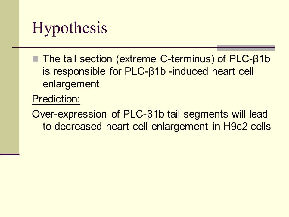 Hypothesis The tail section (extreme C-terminus) of PLC-β1b is responsible for PLC-β1b -induced heart cell enlargement Prediction: Over-expression of PLC-β1b tail segments will lead to decreased heart cell enlargement in H9c2 cells