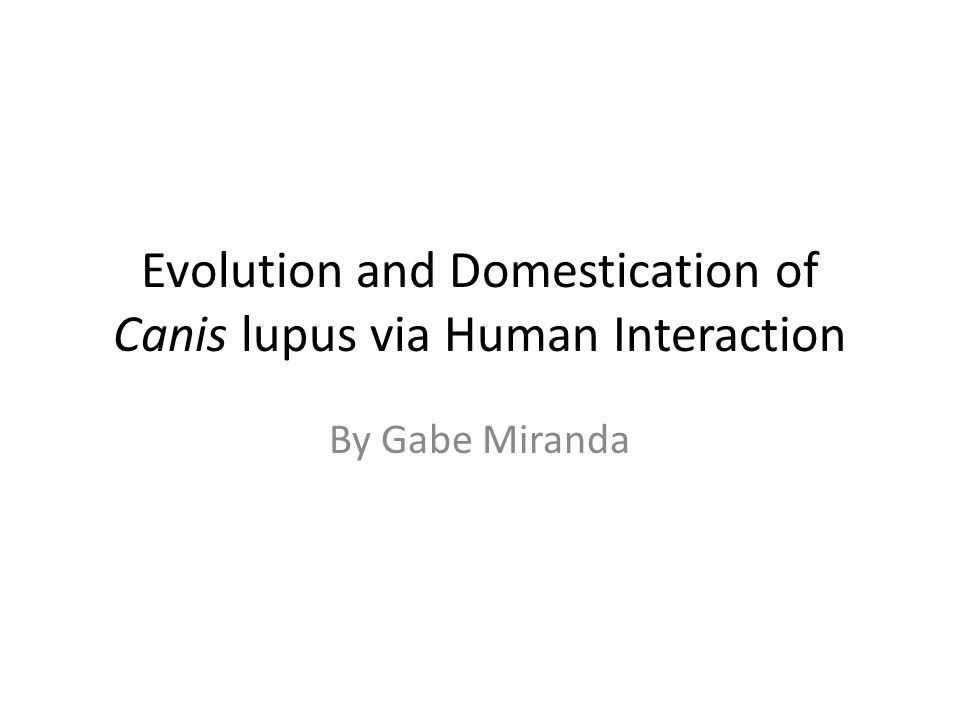 Evolution and Domestication of Canis lupus via Human Interaction By Gabe Miranda