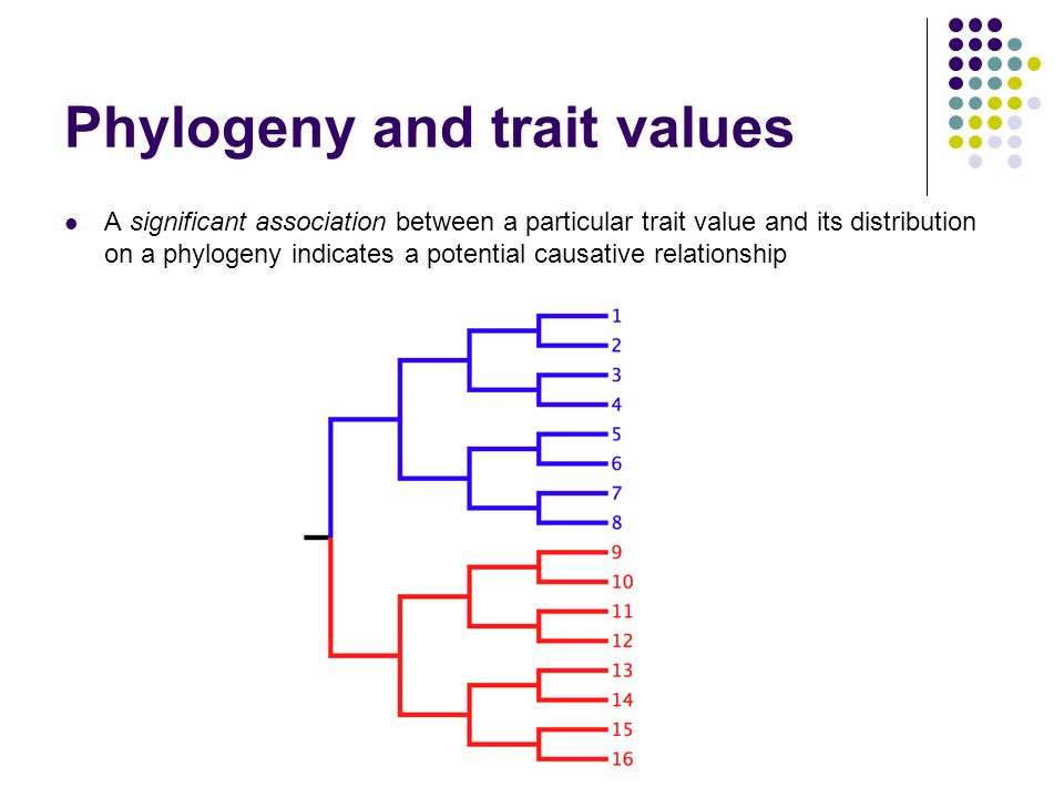 Phylogeny and trait values A significant association between a particular trait value and its distribution on a phylogeny indicates a potential causat