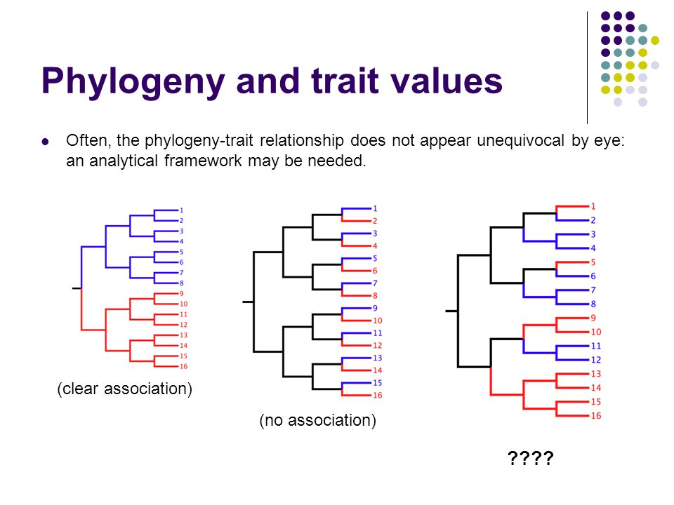 Phylogeny and trait values Often, the phylogeny-trait relationship does not appear unequivocal by eye: an analytical framework may be needed. (clear a