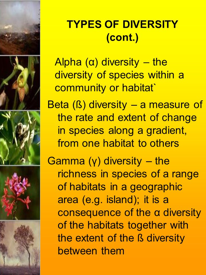 TYPES OF DIVERSITY (cont.) Beta (ß) diversity – a measure of the rate and extent of change in species along a gradient, from one habitat to others Alp