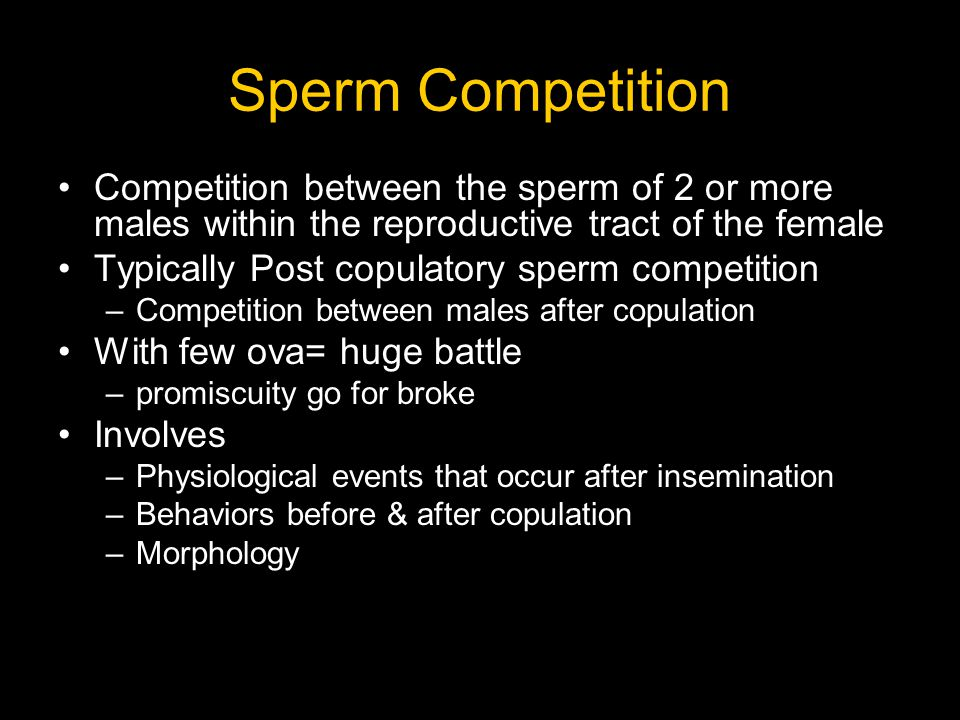 Male transfers sperm packet to female reproductive tract using pedipalp Pedipalp breaks off in female & created mating plug