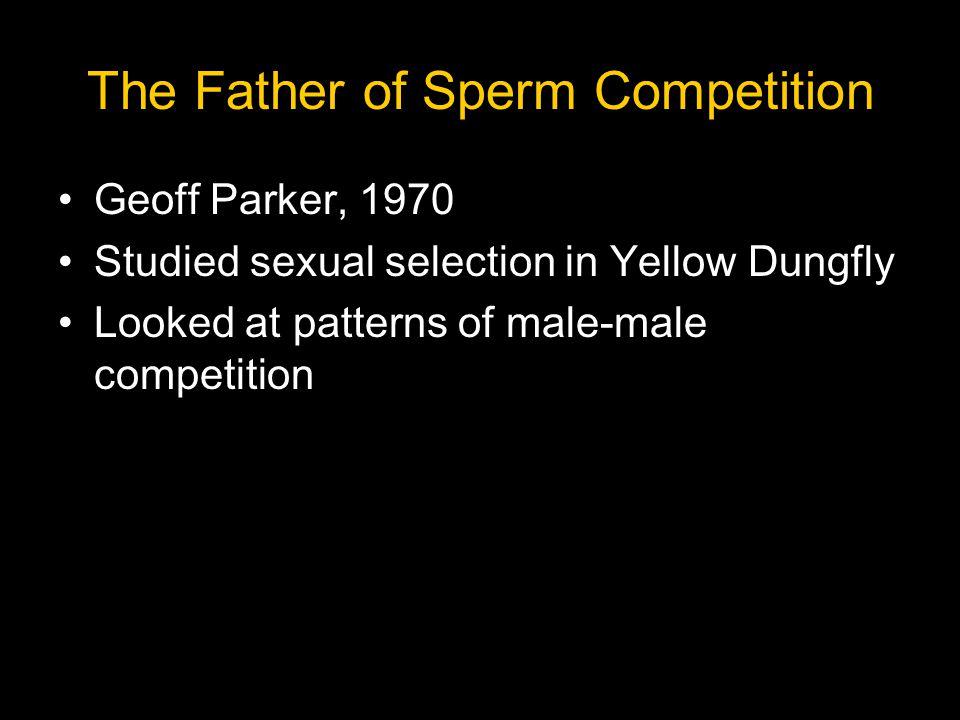 Yellow Dungfly