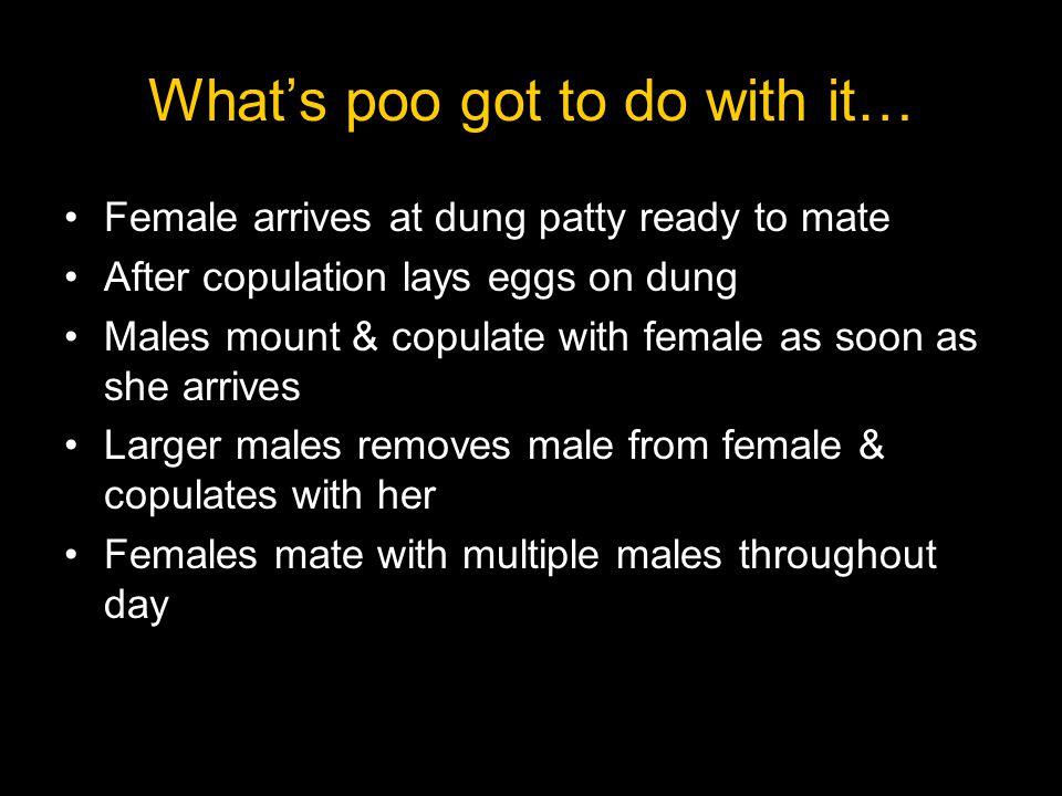 Sperm Precedence The sperm that fertilizes the egg effected by the order of fertilization