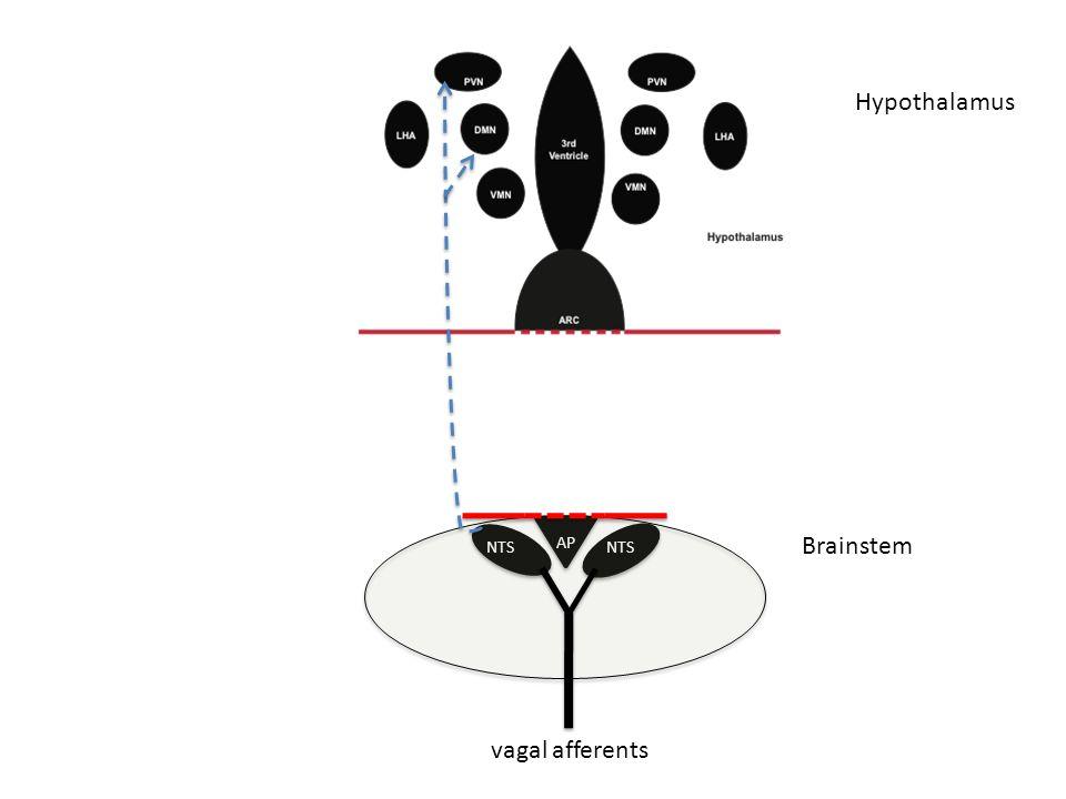 AP NTS vagal afferents Brainstem Hypothalamus