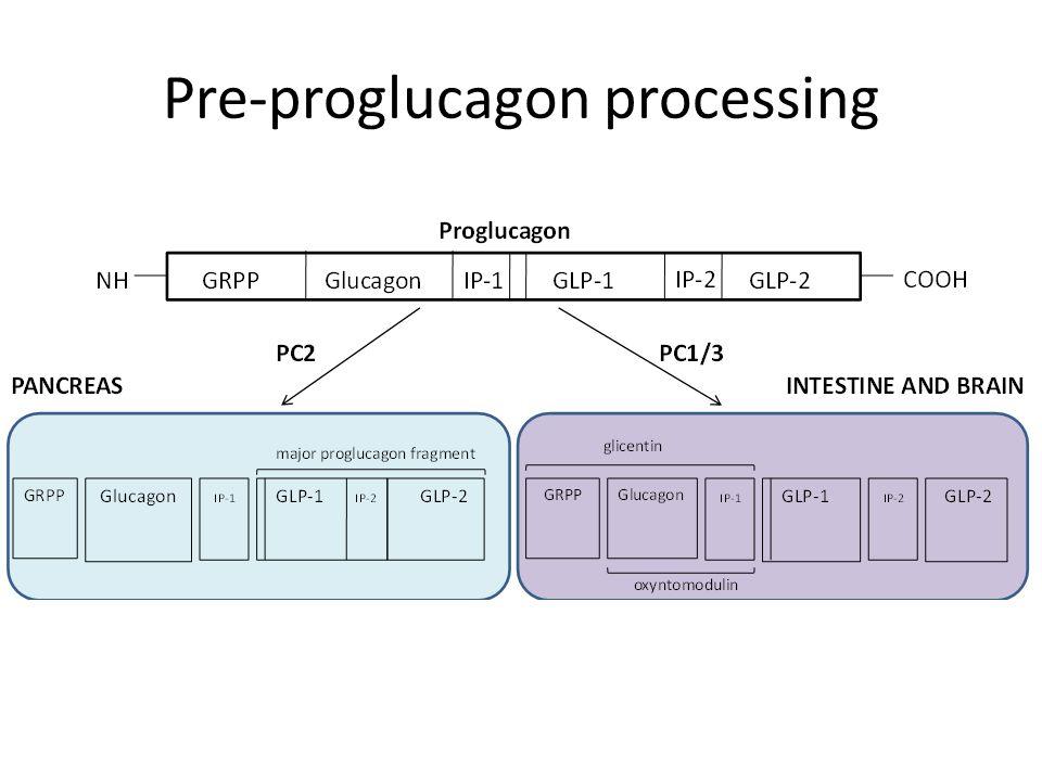 Pre-proglucagon processing
