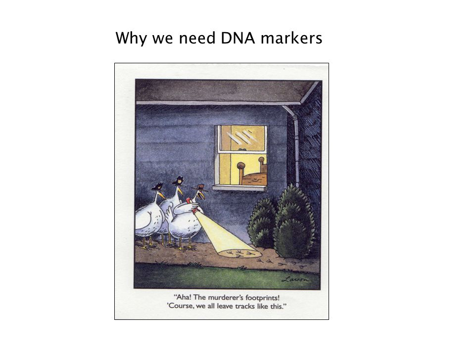 Why we need DNA markers