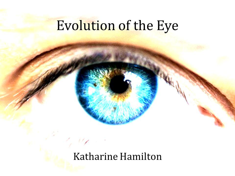 Evolution of the Eye Katharine Hamilton