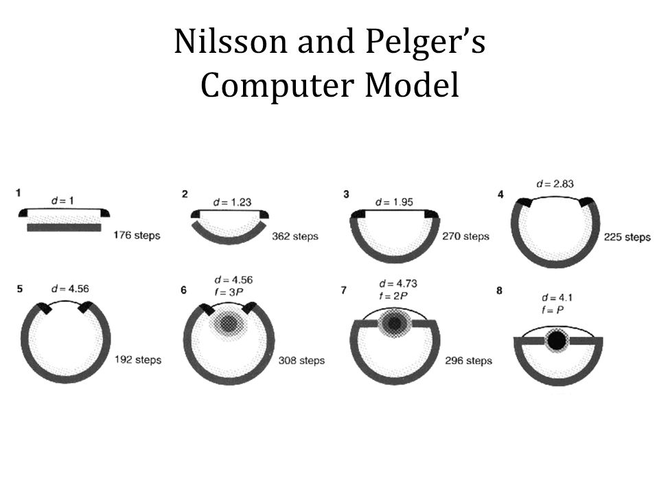 Nilsson and Pelger's Computer Model