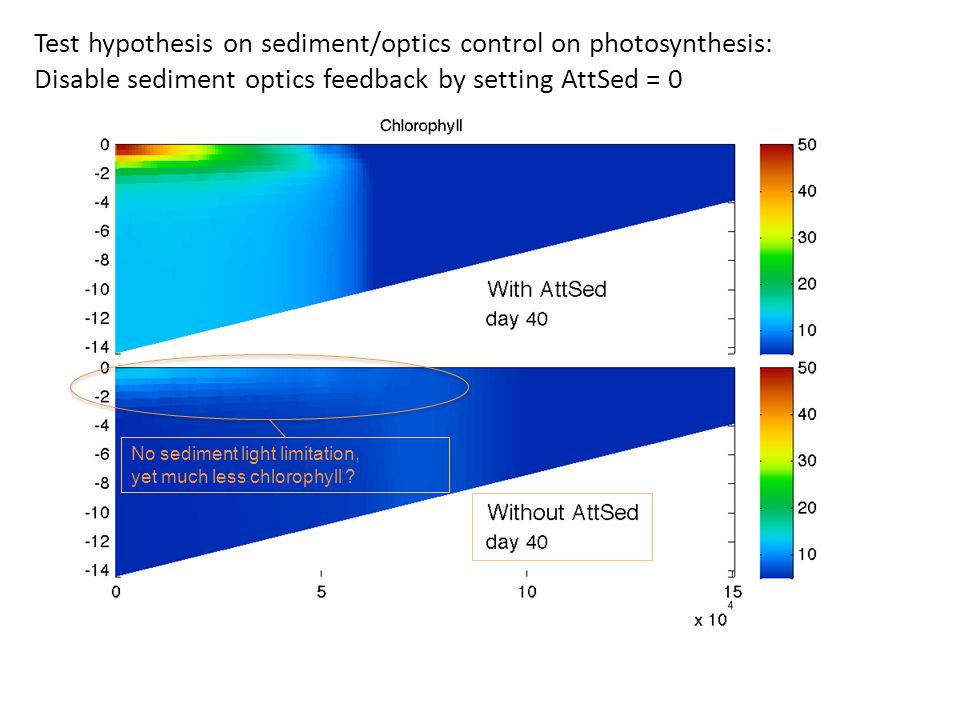 Test hypothesis on sediment/optics control on photosynthesis: Disable sediment optics feedback by setting AttSed = 0 No sediment light limitation, yet much less chlorophyll