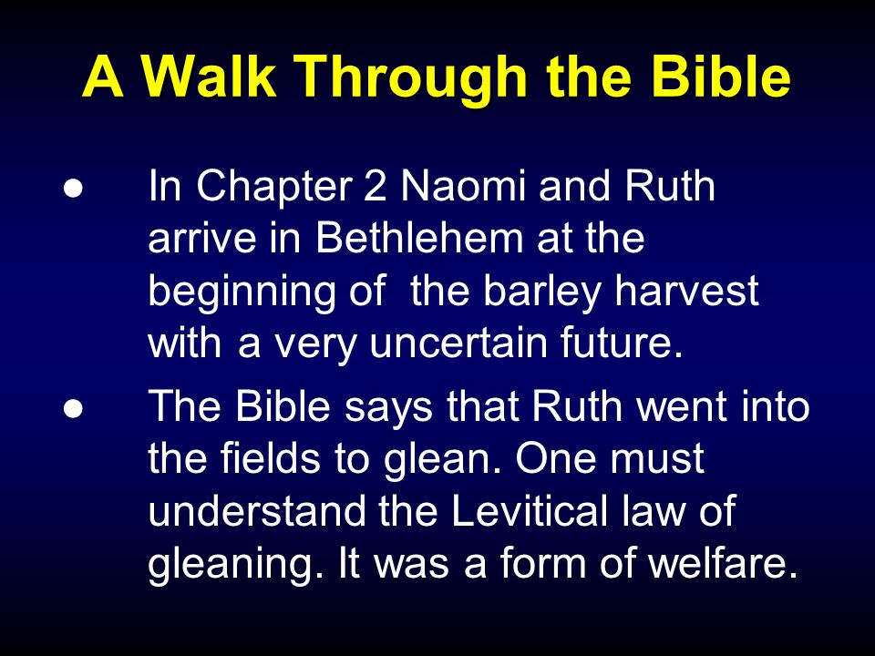 A Walk Through the Bible ●In Chapter 2 Naomi and Ruth arrive in Bethlehem at the beginning of the barley harvest with a very uncertain future.