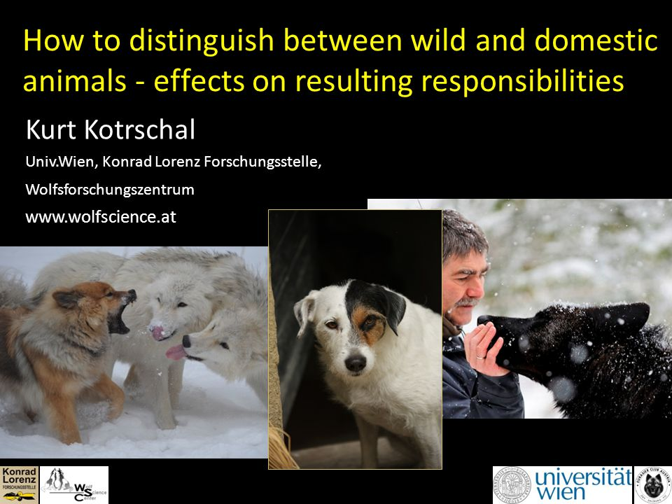 How to distinguish between wild and domestic animals - effects on resulting responsibilities Kurt Kotrschal Univ.Wien, Konrad Lorenz Forschungsstelle, Wolfsforschungszentrum www.wolfscience.at