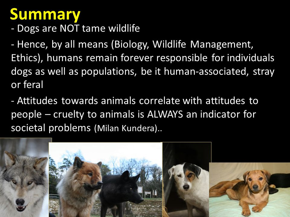 Summary - Hence, by all means (Biology, Wildlife Management, Ethics), humans remain forever responsible for individuals dogs as well as populations, be it human-associated, stray or feral - Dogs are NOT tame wildlife - Attitudes towards animals correlate with attitudes to people – cruelty to animals is ALWAYS an indicator for societal problems (Milan Kundera)..