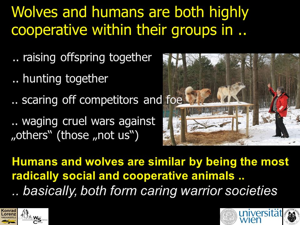 How are wolves related with dogs and dogs with other dogs (Parker et al. 2004) ?