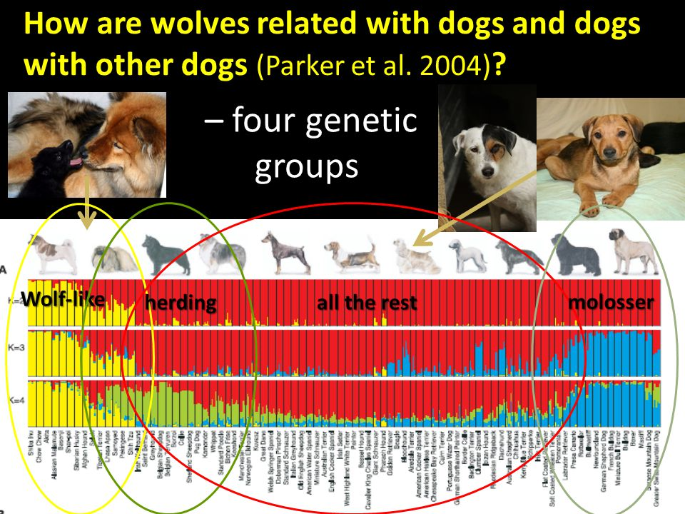 Domestication - DOMESTICATION= Genetic and phenotypic change of species due to living in a human – dominated environment (human-facilitated selection, mainly selection for tameness, Hare et al.