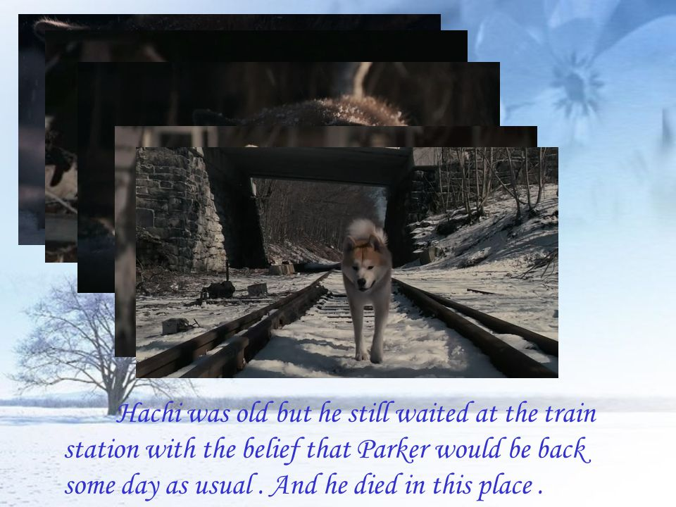 Hachi was old but he still waited at the train station with the belief that Parker would be back some day as usual.
