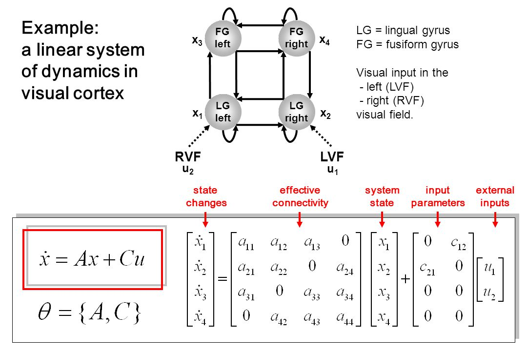 LG = lingual gyrus FG = fusiform gyrus Visual input in the - left (LVF) - right (RVF) visual field.