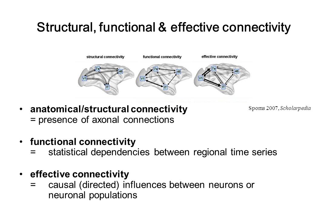 Anatomical connectivity neuronal communication via synaptic contacts visualisation by tracing techniques long-range axons  association fibres