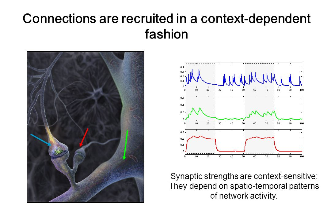Connections are recruited in a context-dependent fashion Synaptic strengths are context-sensitive: They depend on spatio-temporal patterns of network activity.