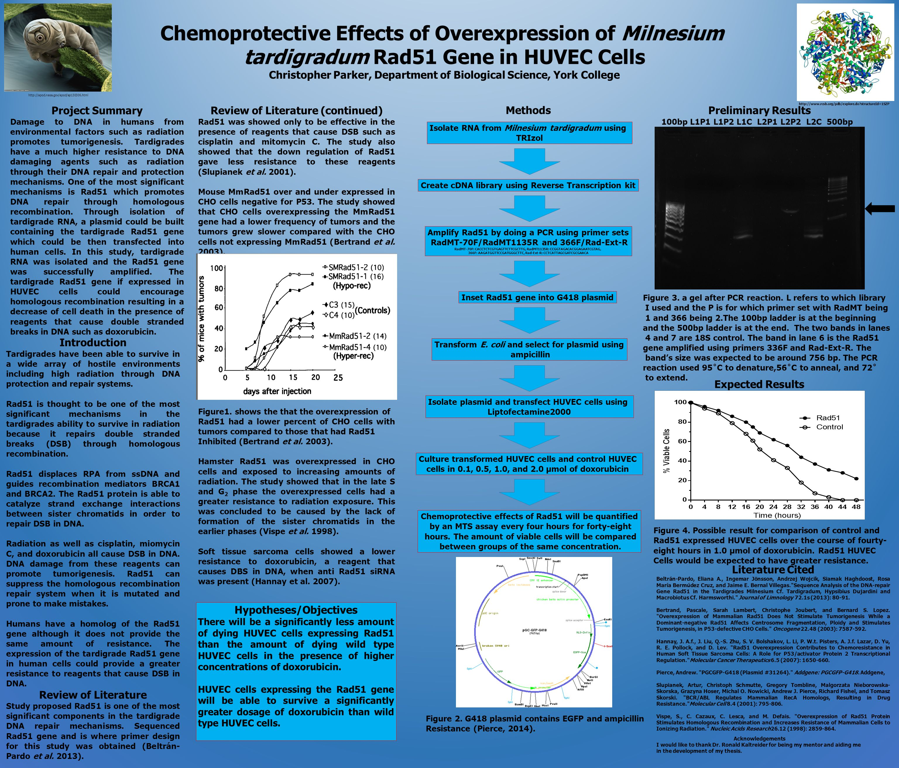 Chemoprotective Effects of Overexpression of Milnesium tardigradum Rad51 Gene in HUVEC Cells Christopher Parker, Department of Biological Science, Yor