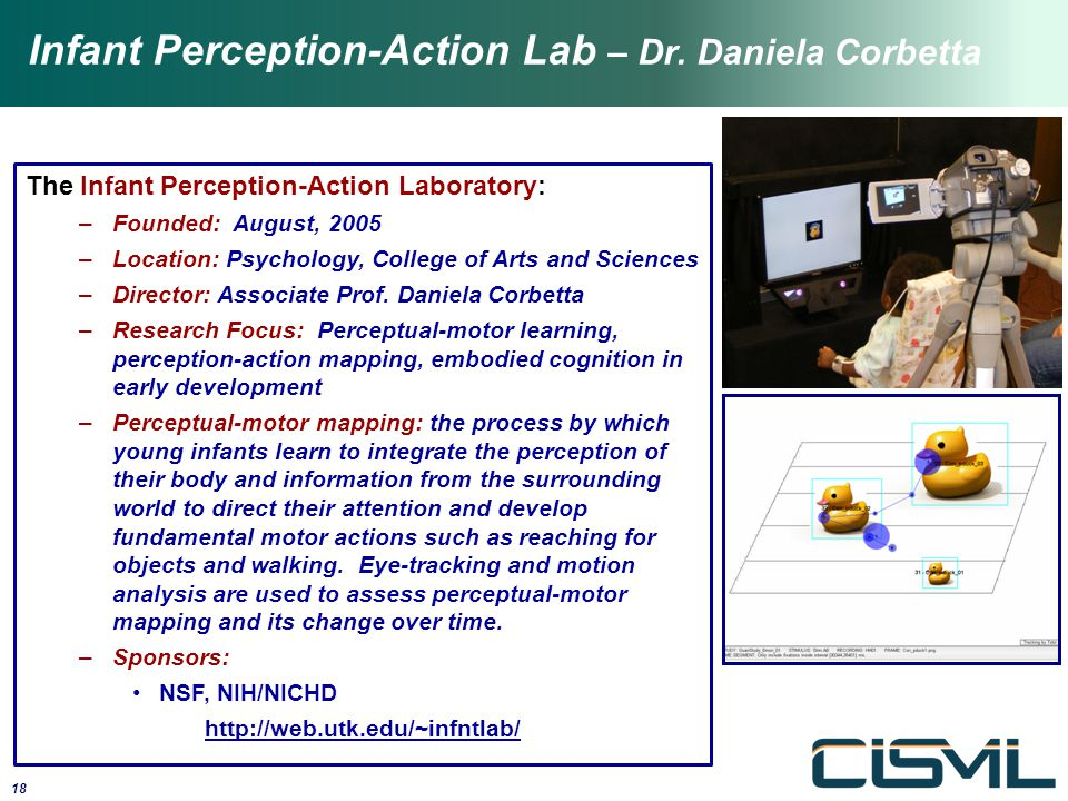 The Infant Perception-Action Laboratory: –Founded: August, 2005 –Location: Psychology, College of Arts and Sciences –Director: Associate Prof. Daniela