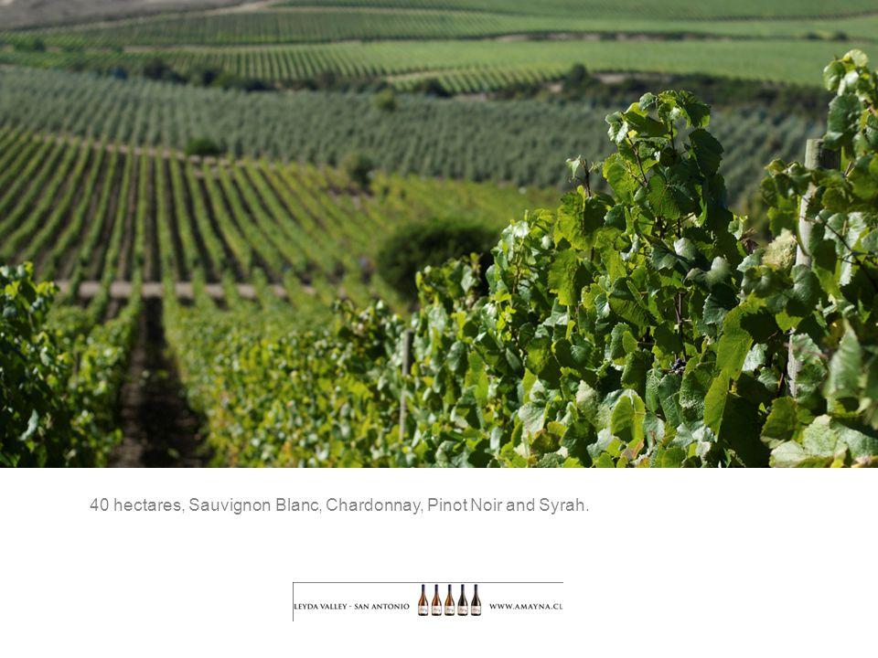 40 hectares, Sauvignon Blanc, Chardonnay, Pinot Noir and Syrah.